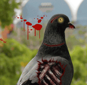 Zombie Pigeon spotted in Las Vegas